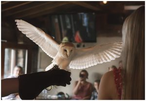 Owl delivering a diamond ring 300x209 - My Blog