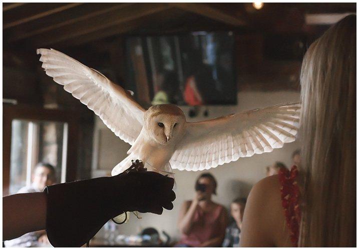 BARN OWL 18TH BIRTHDAY PARTY