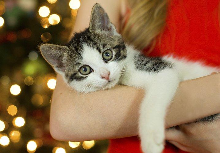 Christmas cat portraits