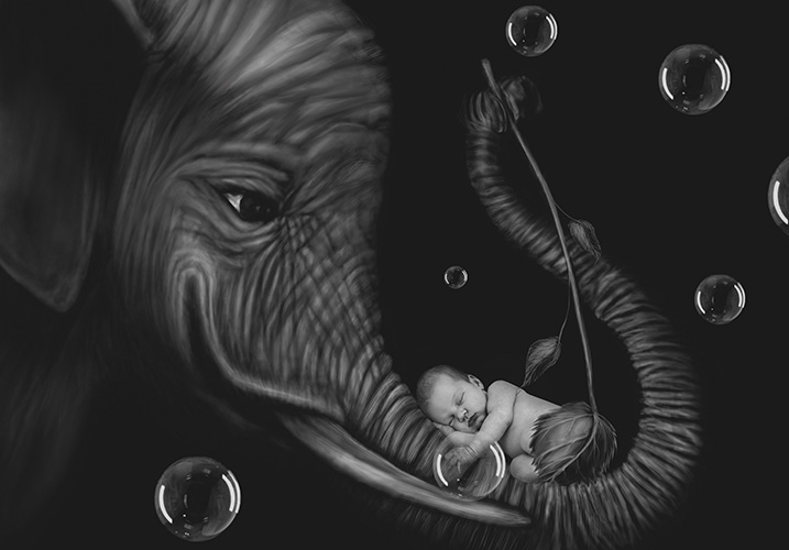 Baby Ruby elephant image - Home