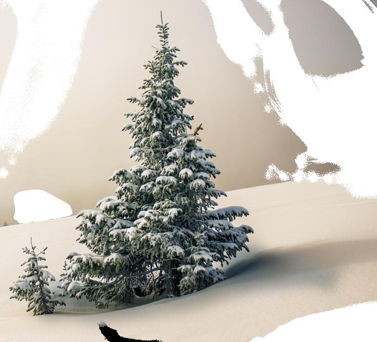 Tree1 1 - CHRISTMAS KIDS PHOTSHOOT CHESHIRE 2019